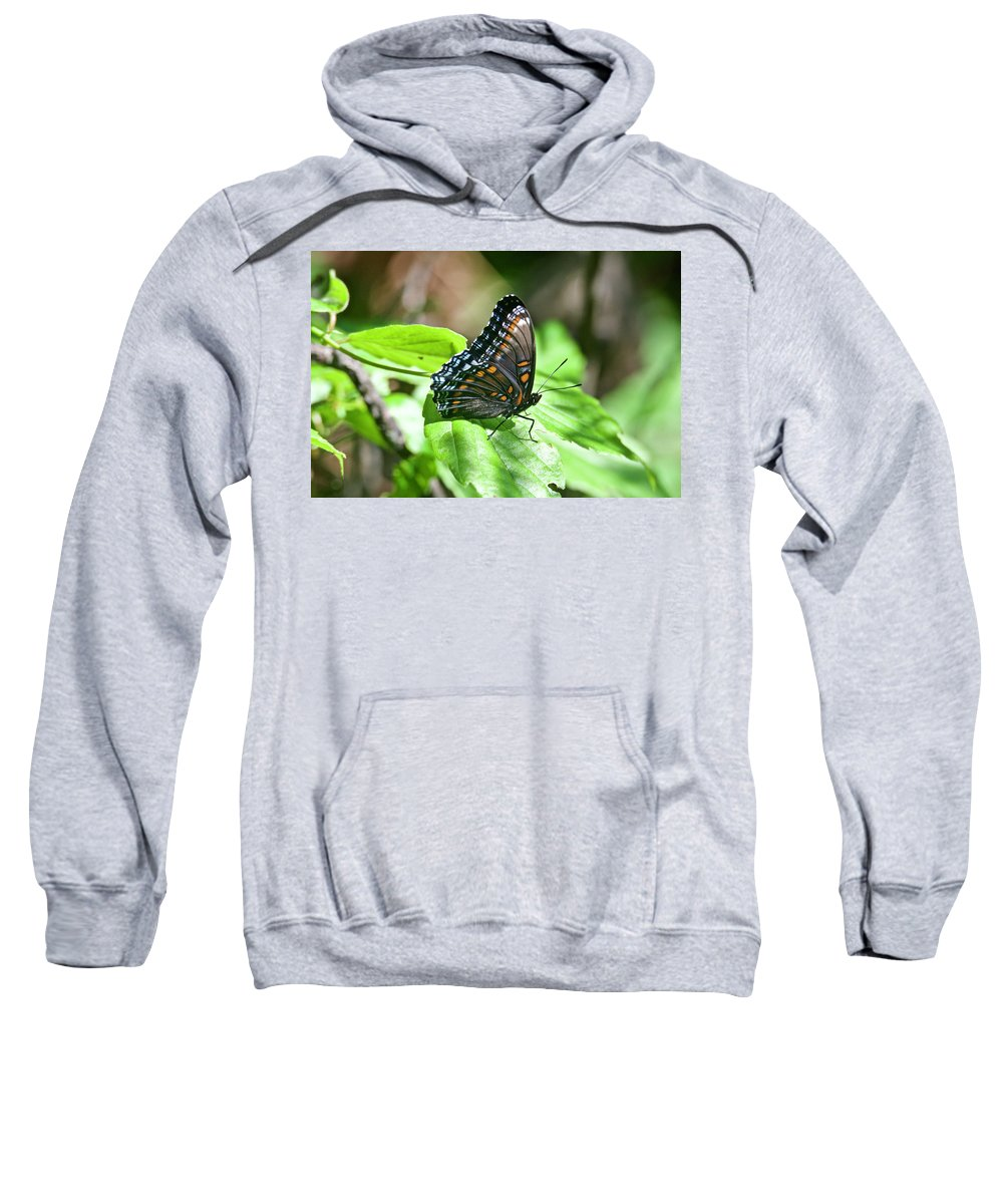 Nature Sweatshirt featuring the photograph Red-spotted Purple 4172 by Michael Peychich