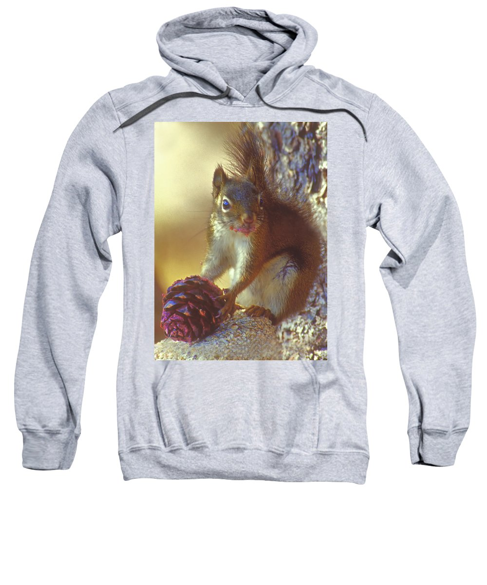 Squirrel Sweatshirt featuring the photograph Red Squirrel With Pine Cone by Gary Beeler