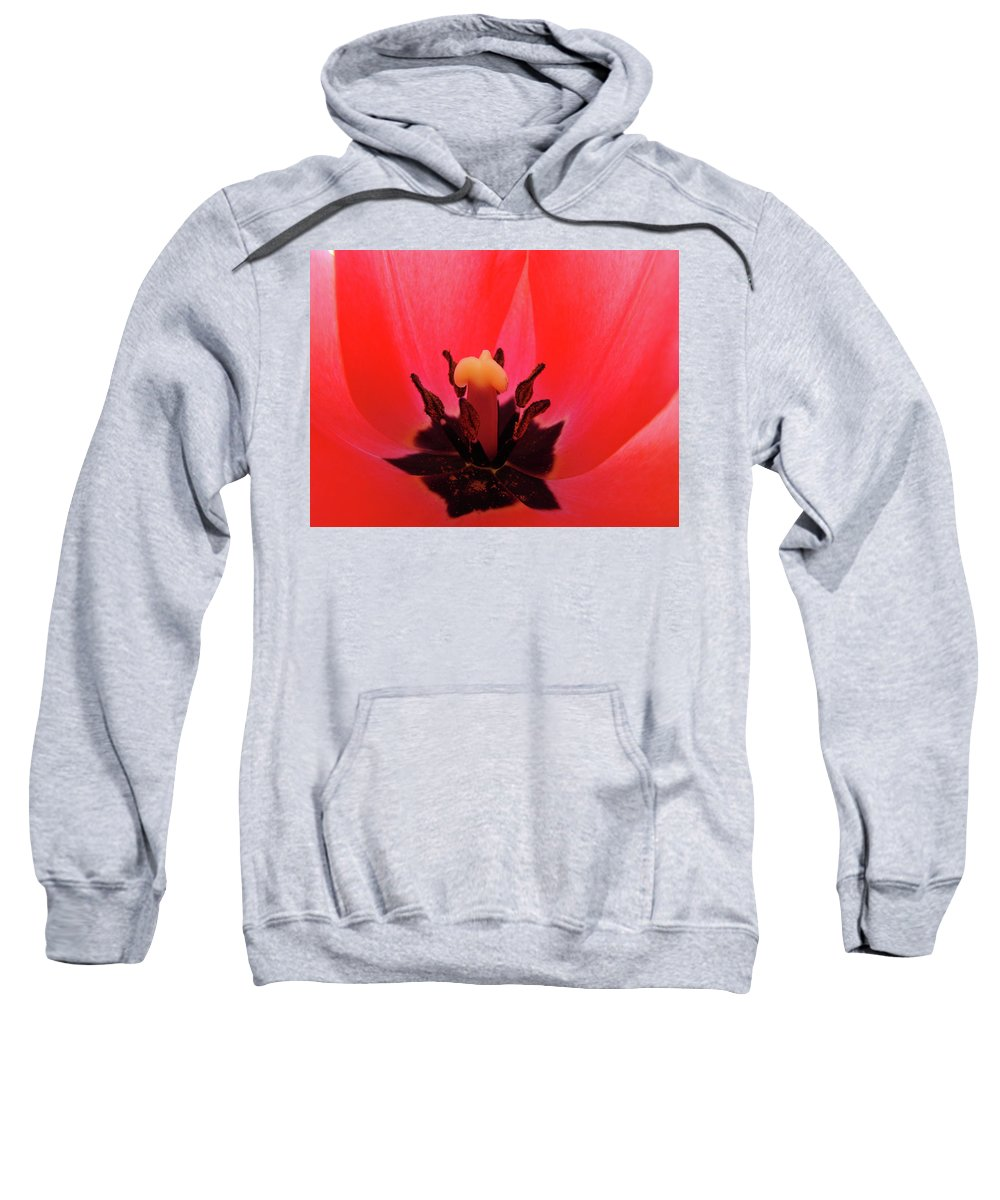 Tulip Sweatshirt featuring the photograph Red Tulip Art Print Inside Tulips Flowers Baslee Troutman by Baslee Troutman