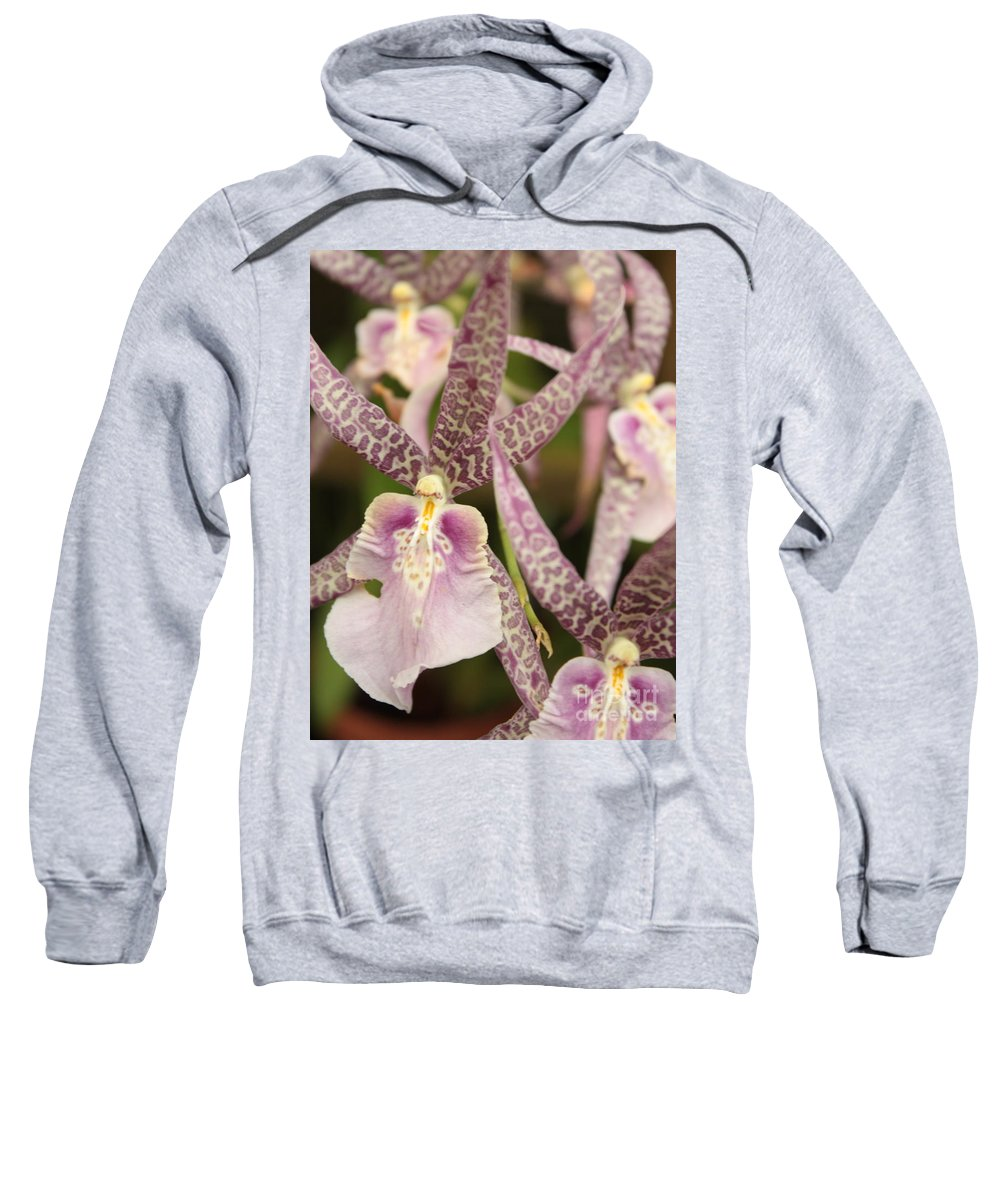 Phalaenopsis Sweatshirt featuring the photograph Regal Orchids by Carol Groenen
