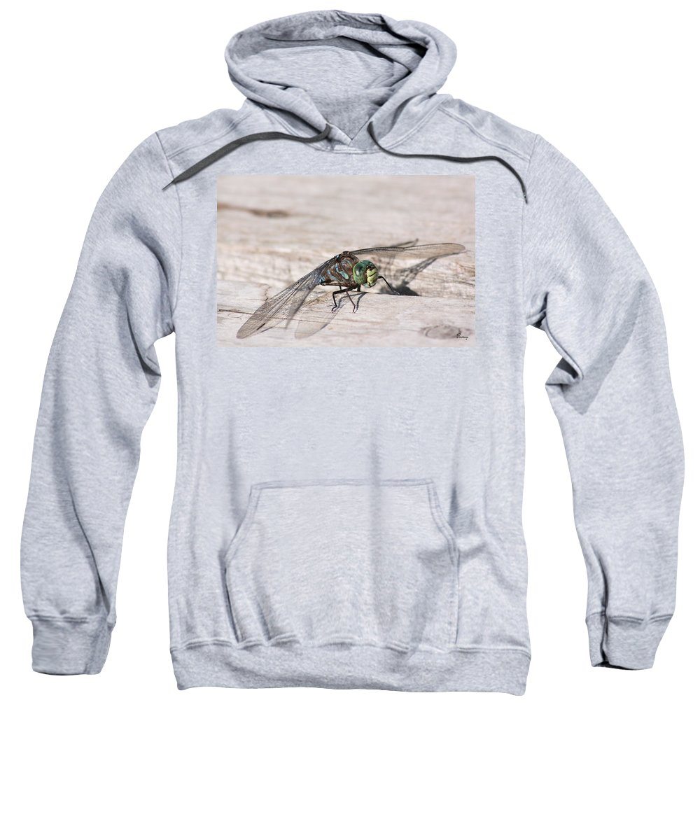 Dragonfly Nature Bug Flying Insect Wings Eyes Colorful Creature Sweatshirt featuring the photograph Rescued Dragonfly by Andrea Lawrence
