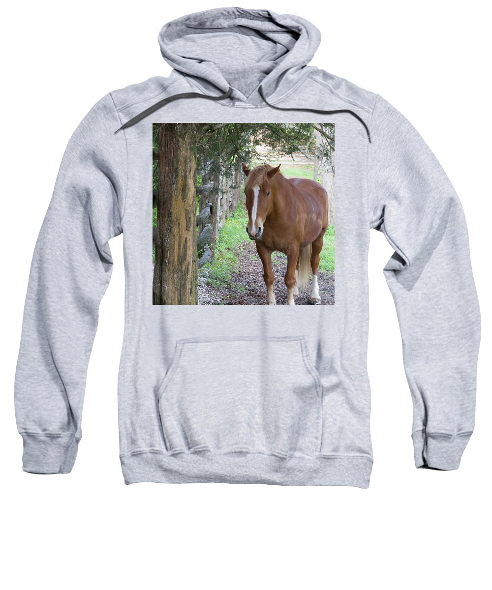 2013 Sweatshirt featuring the photograph Resting In The Shade by Teresa Mucha