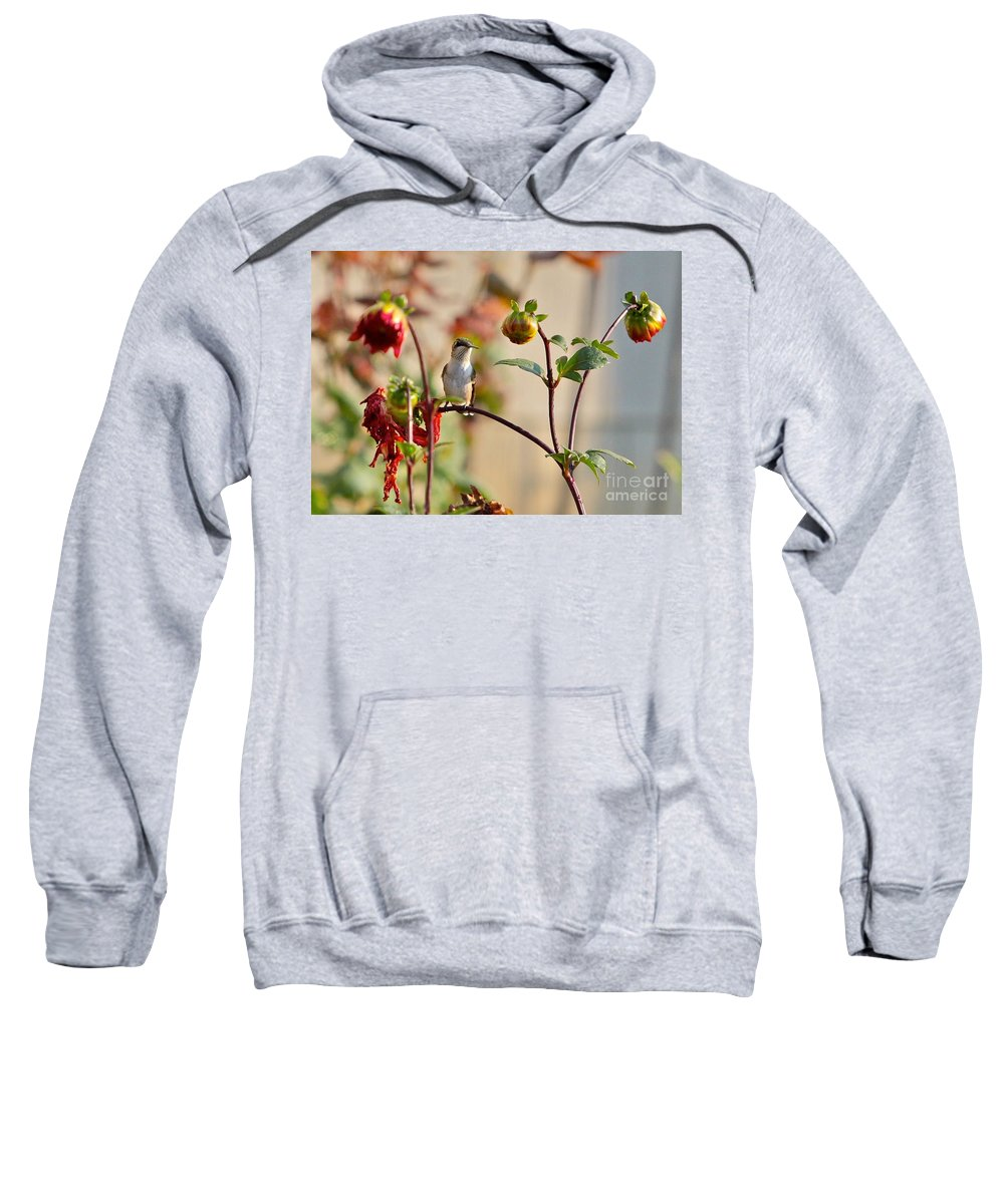 Humming Bird Sweatshirt featuring the photograph Resting by Robert Pearson