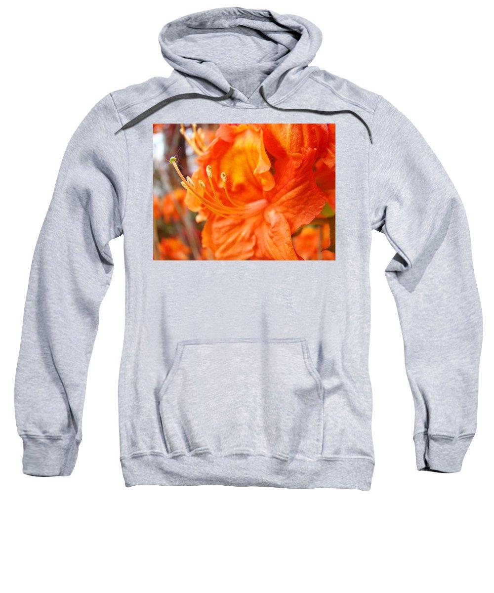 Rhodie Sweatshirt featuring the photograph Rhodies Art Prints Orange Rhododendron Flowers Baslee Troutman by Baslee Troutman
