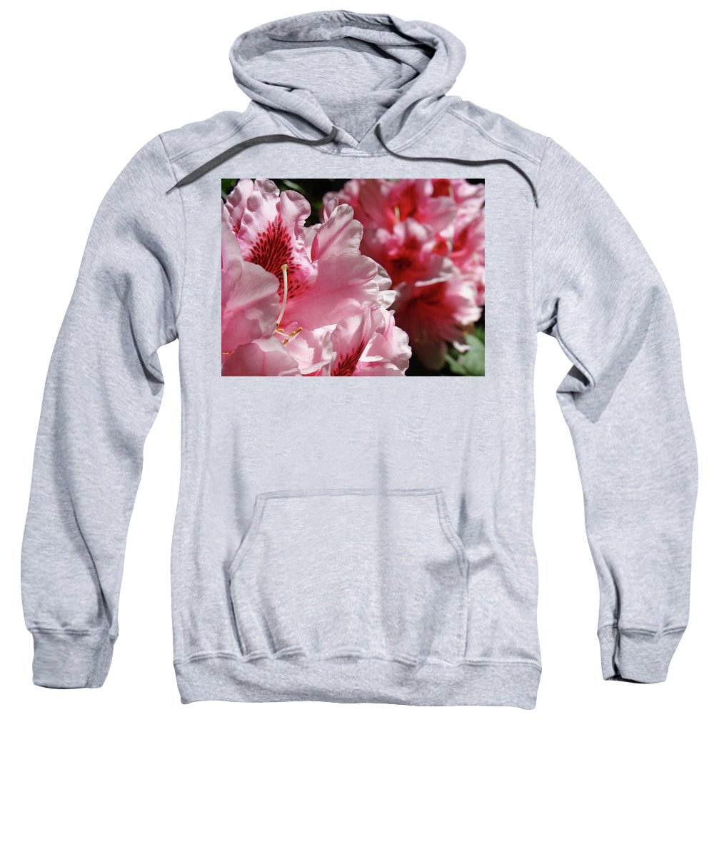 Rhodie Sweatshirt featuring the photograph Rhododendrons Art Prints Floral Pink Rhodies Canvas Baslee Troutman by Baslee Troutman