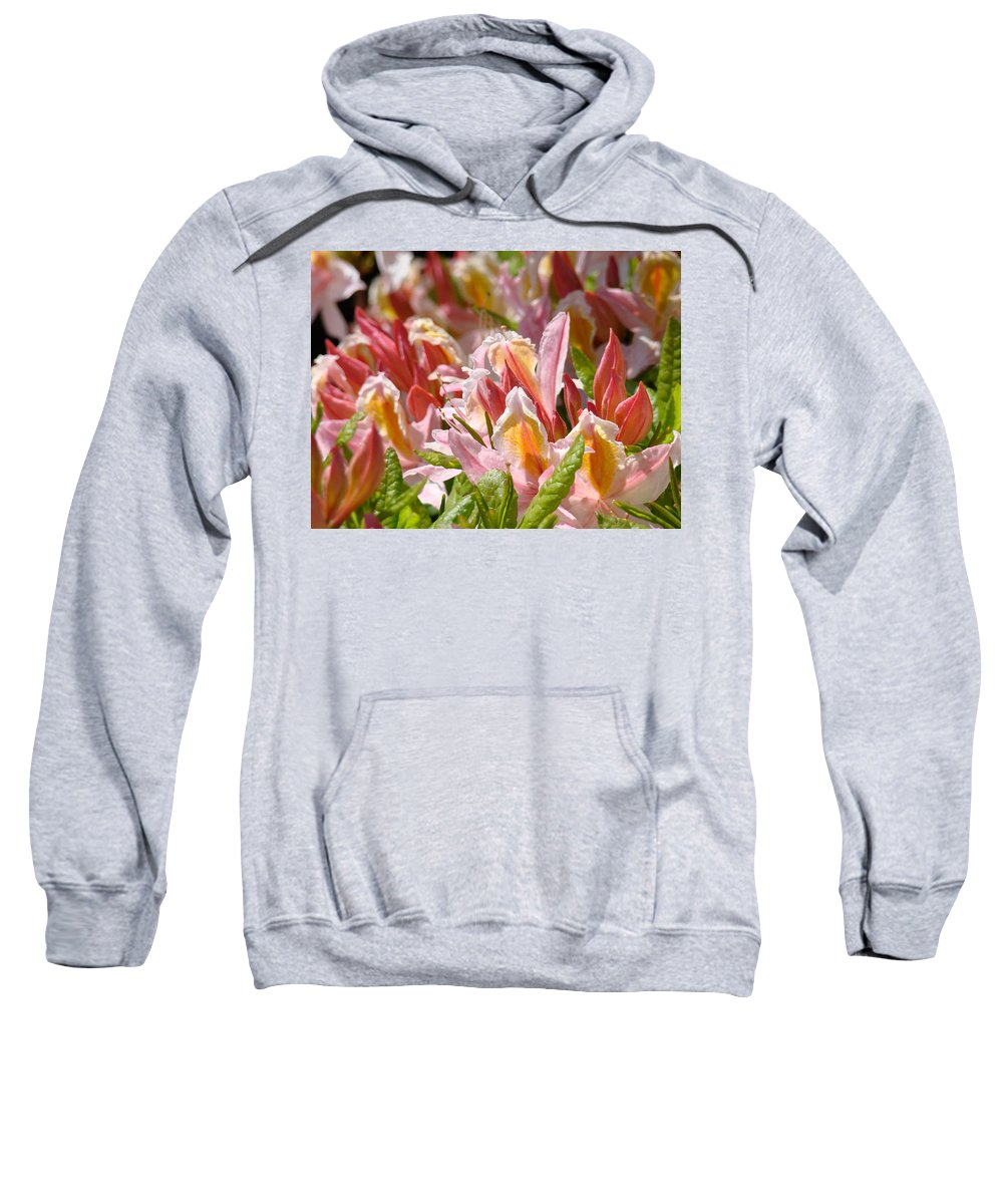 Rhodie Sweatshirt featuring the photograph Rhododendrons Floral Art Prints Canvas Pink Orange Rhodies Baslee Troutman by Baslee Troutman