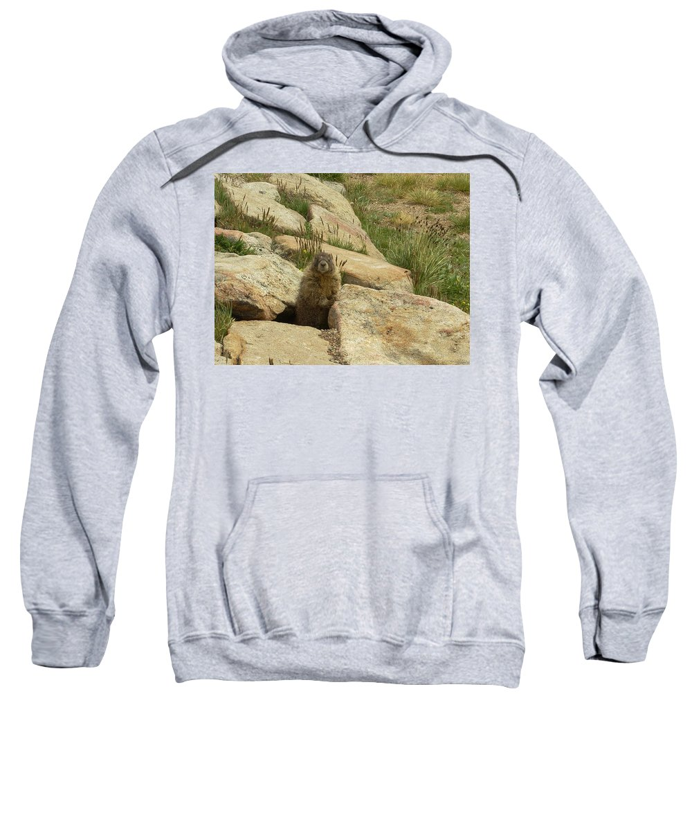 Critter Sweatshirt featuring the photograph Rock Critter by Sara Stevenson