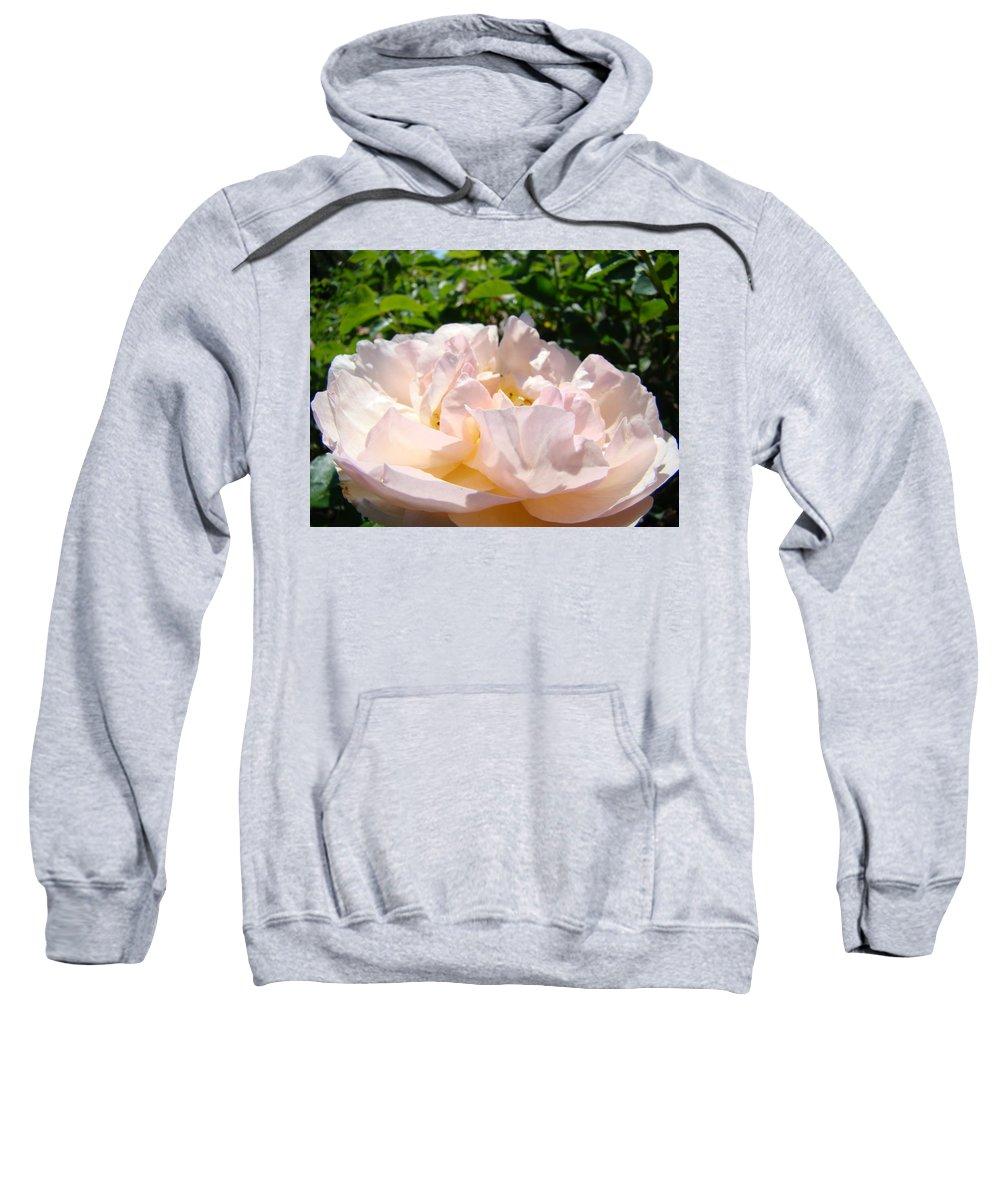 Rose Sweatshirt featuring the photograph Rose Art Prints Canvas Sunlit Pink Rose Garden Baslee Troutman by Baslee Troutman