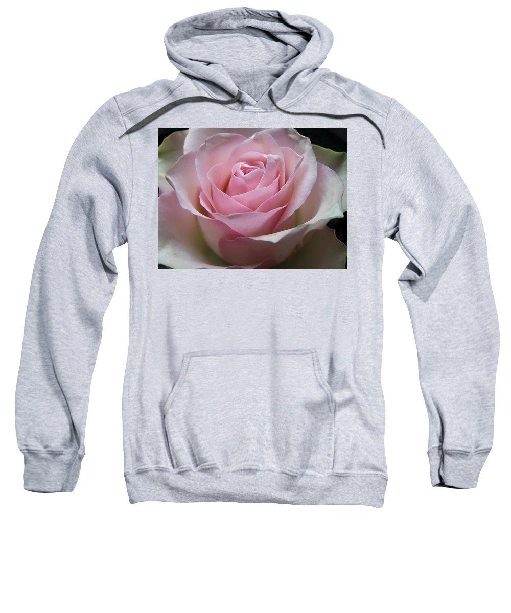 Rose Sweatshirt featuring the photograph Rose by Daniel Csoka