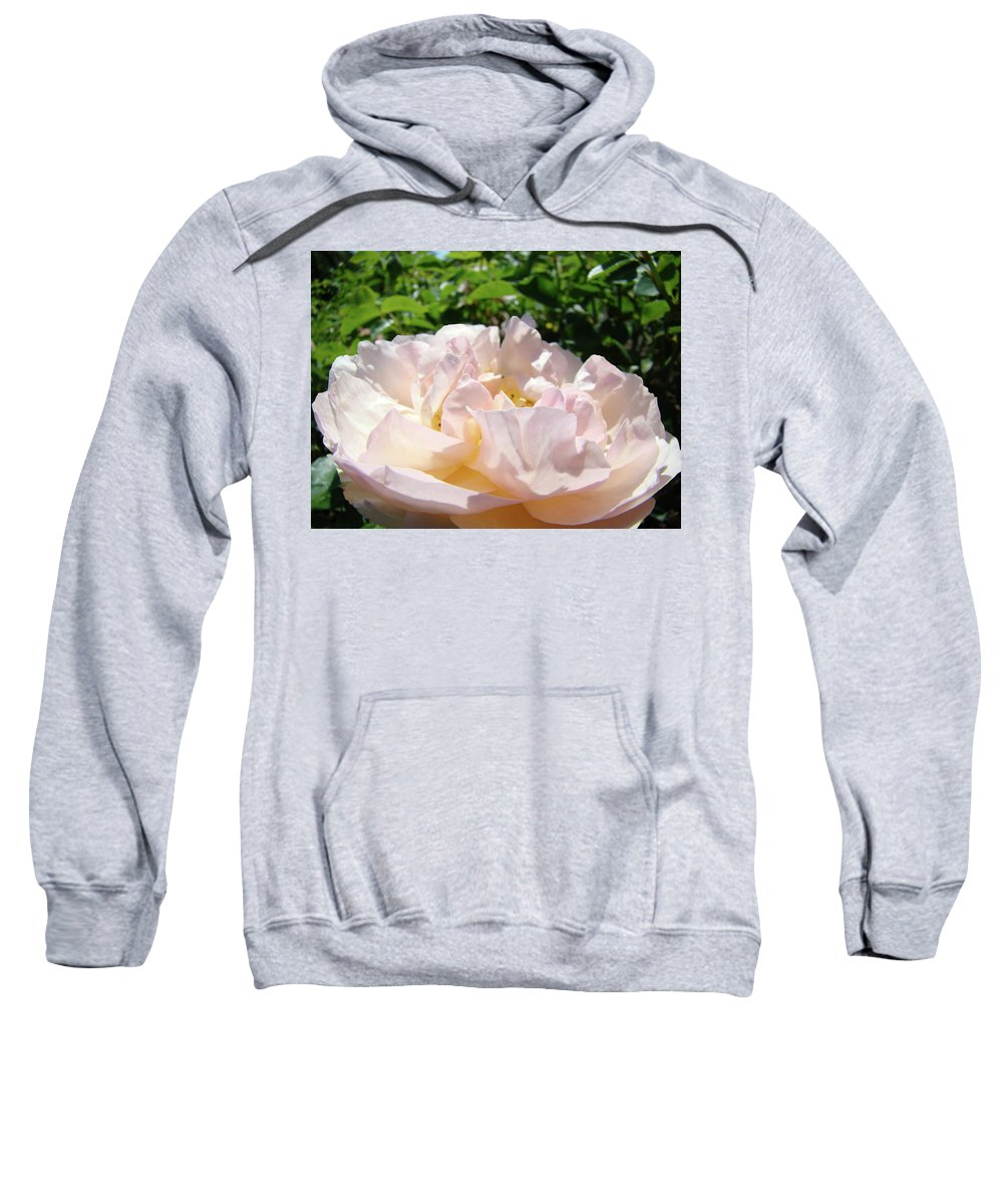 Rose Sweatshirt featuring the photograph Rose Pink Sunlit Rose Flower Art Prints Baslee Troutman by Baslee Troutman