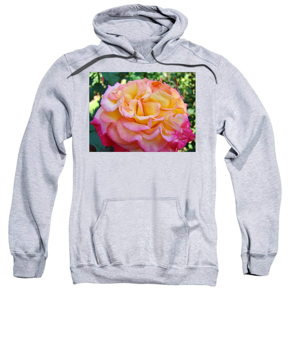 Rose Sweatshirt featuring the photograph Rose Pink Yellow Rose Flower 2 Rose Garden Giclee Prints Baslee Troutman by Baslee Troutman