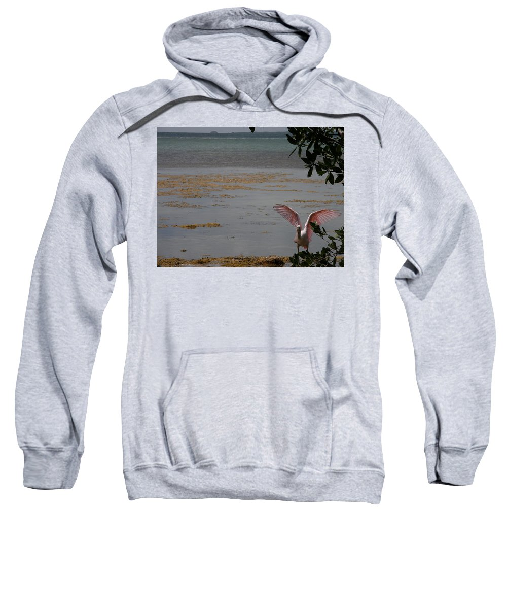 Roseate Spoonbill Sweatshirt featuring the photograph Roseate Spoonbill by Kimberly Mohlenhoff