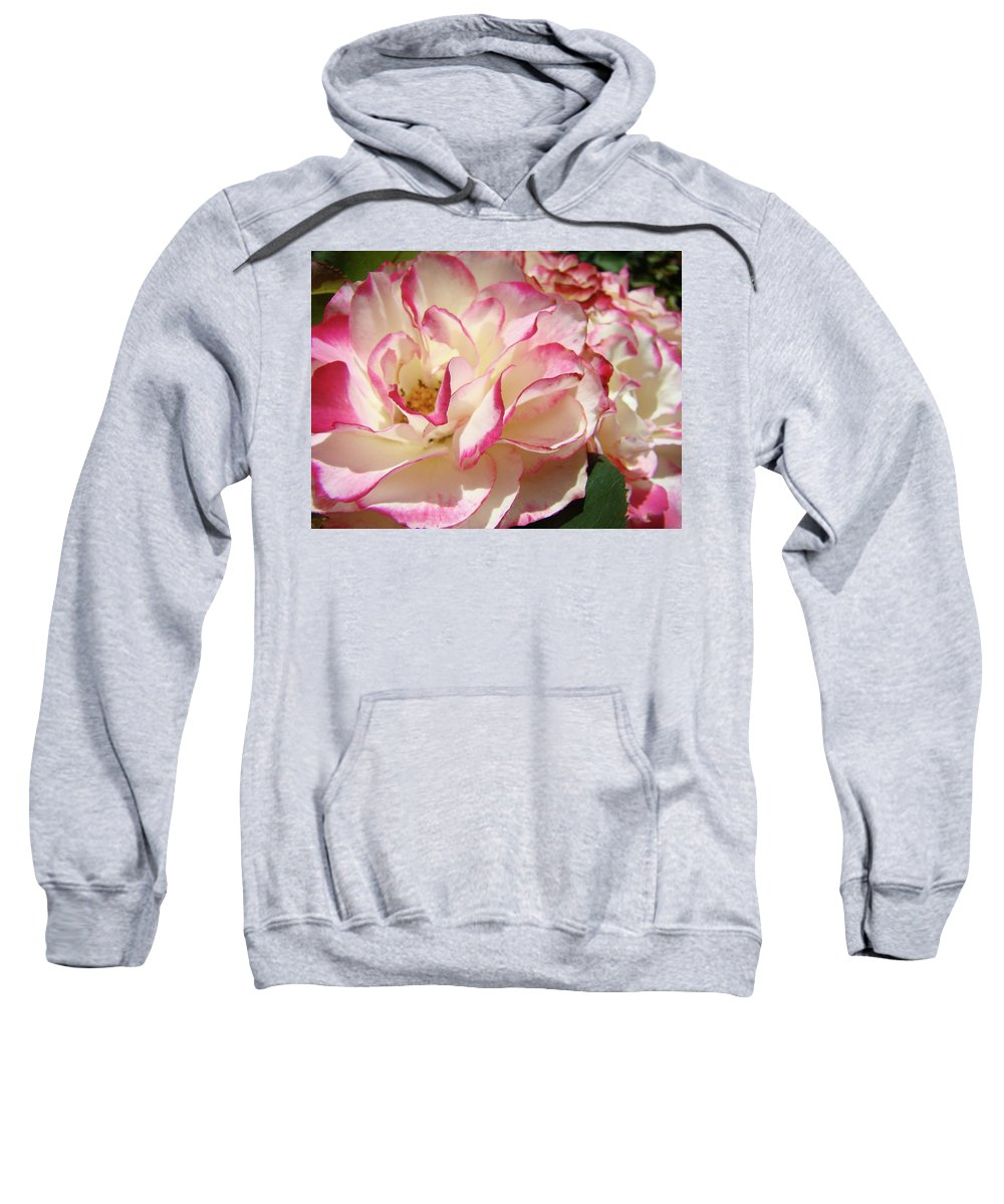 Rose Sweatshirt featuring the photograph Roses Pink White Rose Flowers 4 Rose Garden Artwork Baslee Troutman by Baslee Troutman