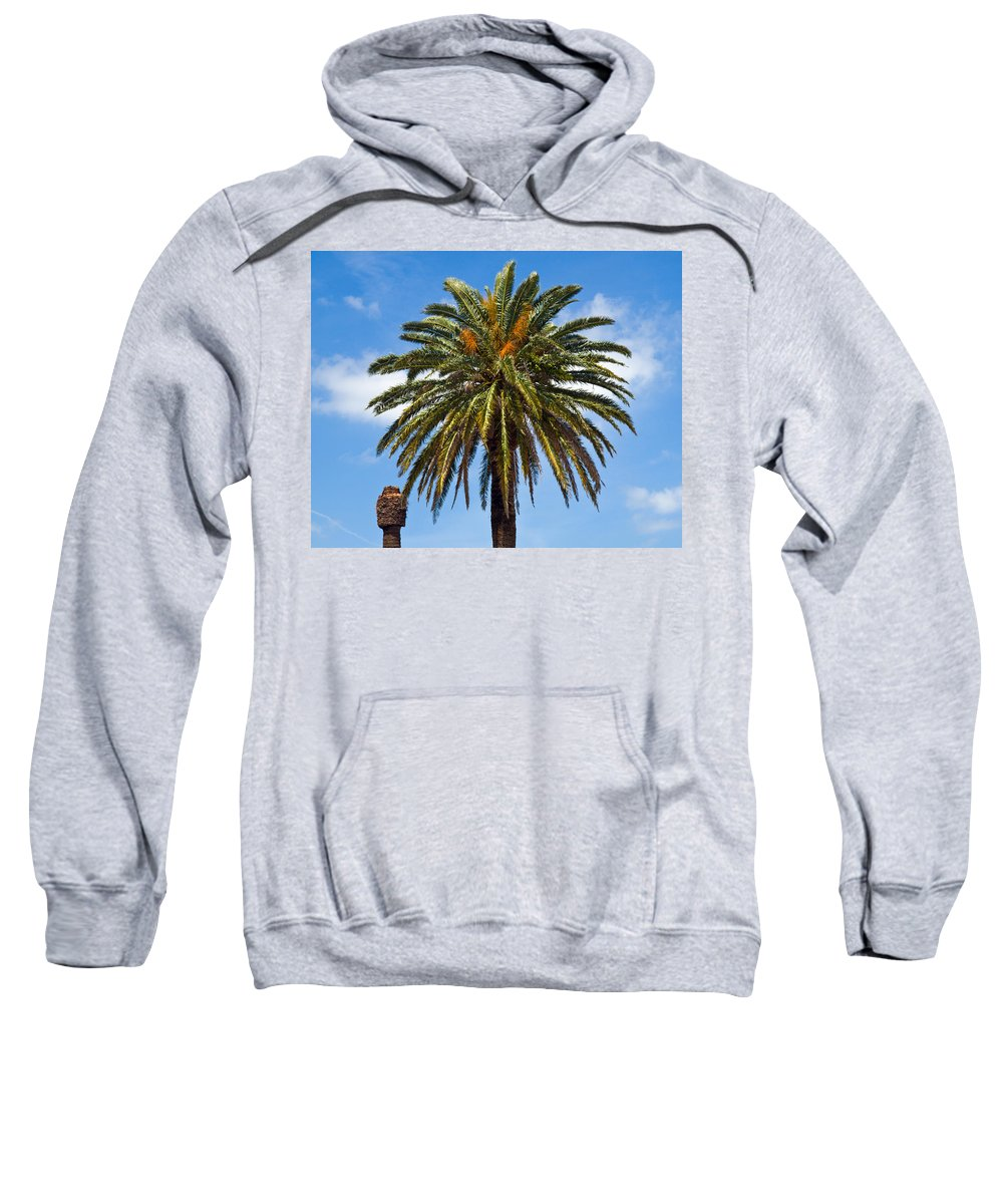 Palm; Tree; Royal; Queen; Scepter; Florida; Frond; Saw; Palmetto; Branch; Wave; Wind; Breeze; Scrub; Sweatshirt featuring the photograph Royal Palm In Florida by Allan Hughes