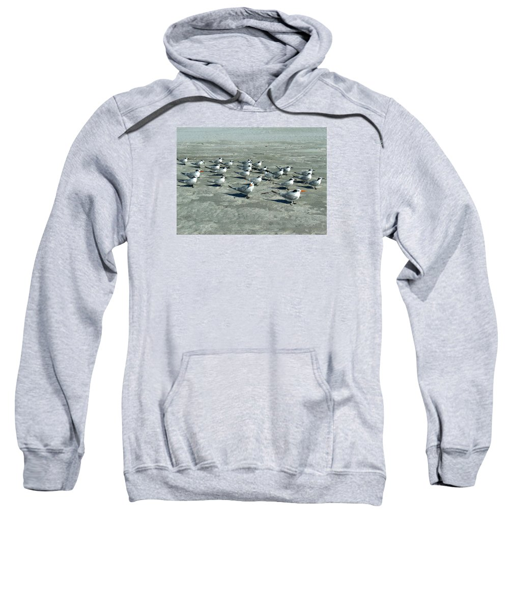 Royal Terns Sweatshirt featuring the photograph Royal Terns #4 by Bonita Barlow