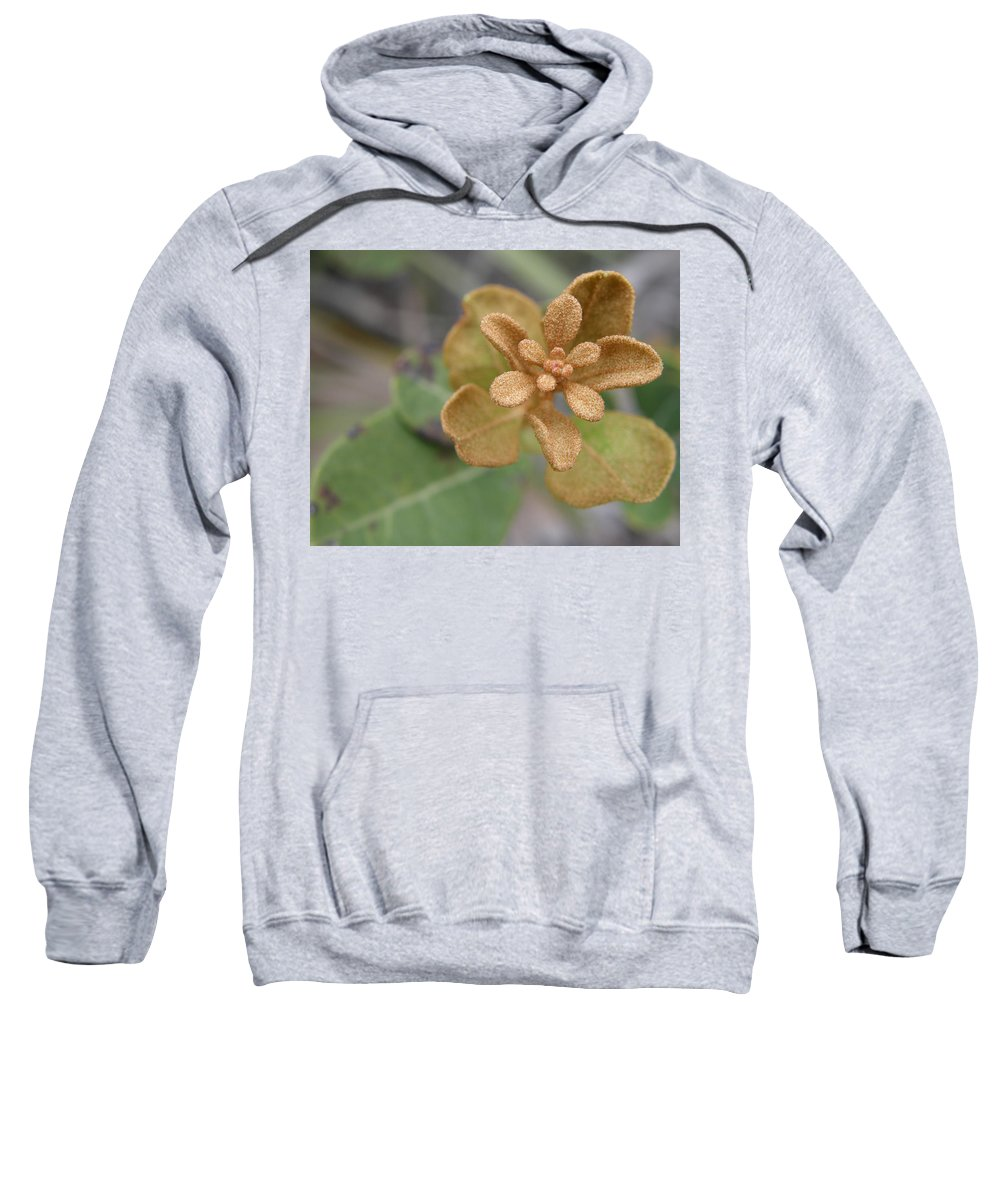 Plant Sweatshirt featuring the photograph Rusty Lyonia by Kimberly Mohlenhoff