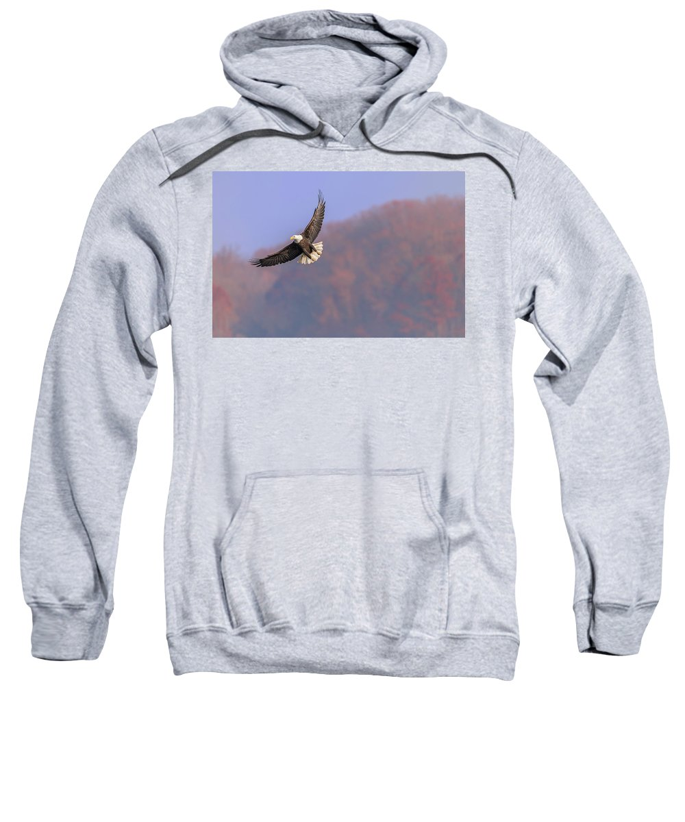 Bald Eagles Sweatshirt featuring the photograph Scouting For Food by Bruce Neumann