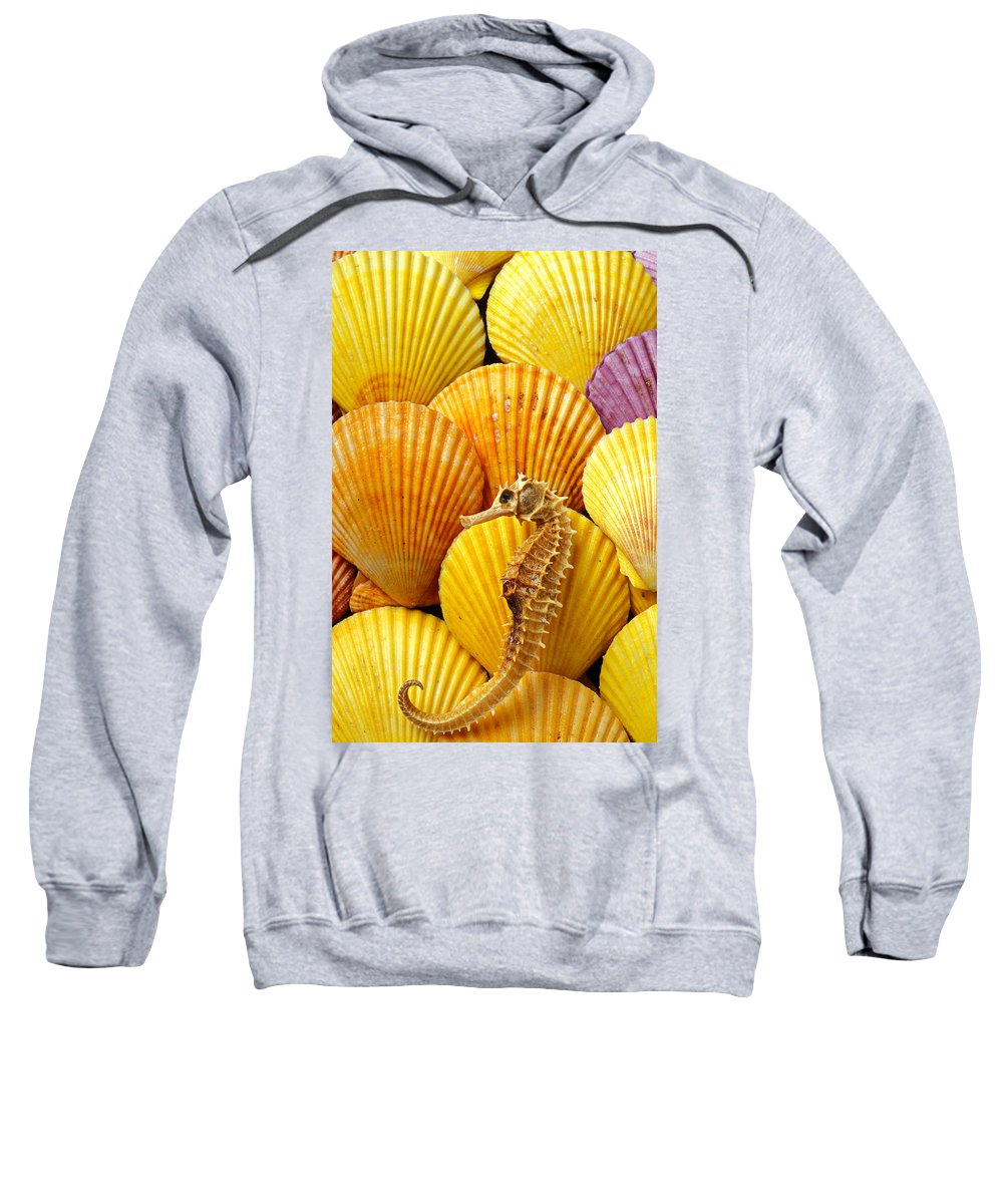 Seahorse Sweatshirt featuring the photograph Sea Horse And Sea Shells by Garry Gay