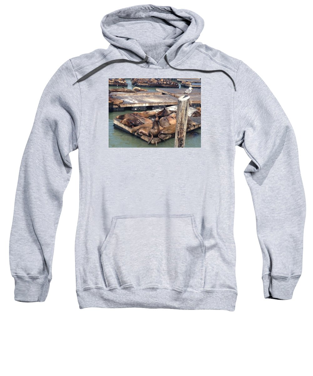 Photograph Sweatshirt featuring the photograph Sea Lions And Seagull by Ayse Belgin Bal