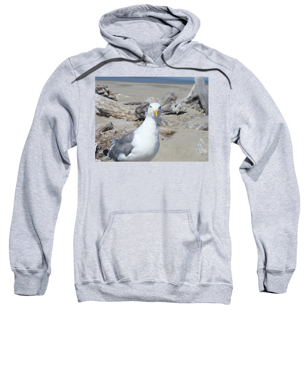 Seagull Sweatshirt featuring the photograph Seagull Bird Art Prints Coastal Beach Driftwood by Baslee Troutman