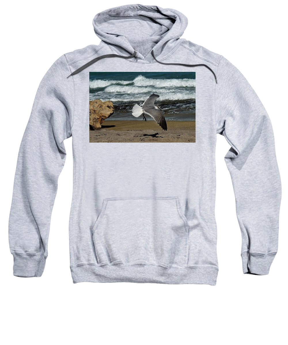 Bird Sweatshirt featuring the photograph Seagull Landing Hutchinson Island, Fl by Colleen Fox