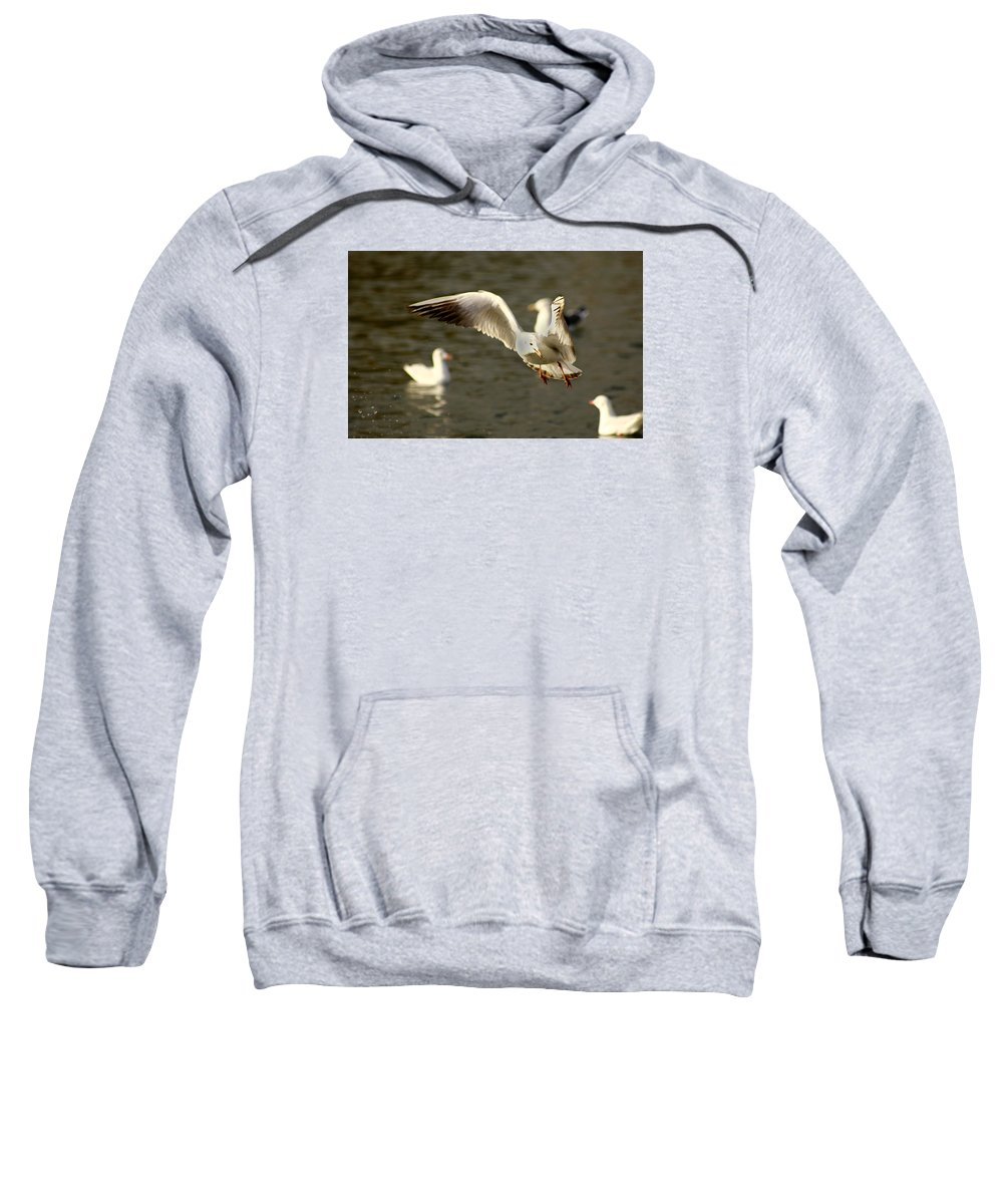 Seagull Sweatshirt featuring the photograph Seagull Manoeuvers by Chris Wharmby