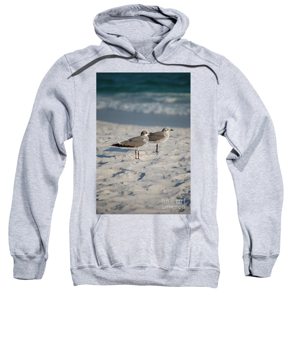 Seagulls Sweatshirt featuring the photograph Seagulls by Robert Meanor