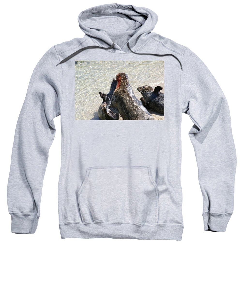 Seals Sweatshirt featuring the photograph Seal Fight by Anthony Jones