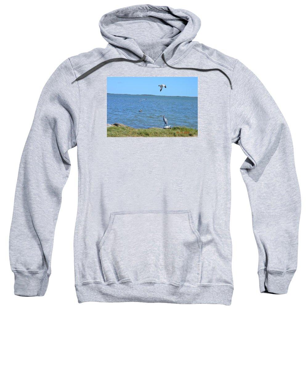 Shore Birds On A Beautiful Perfect Day Sweatshirt featuring the photograph Seaside by Shellda Patino