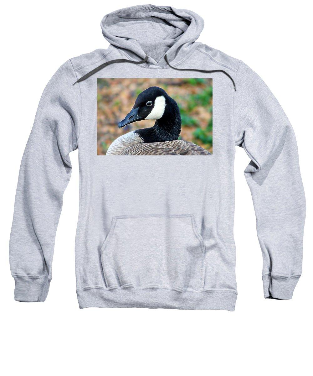 Pamela Walton Sweatshirt featuring the mixed media Shall I Pose For You by Pamela Walton