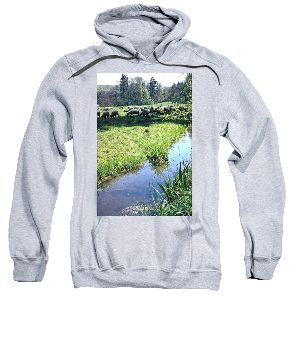 Sheep Sweatshirt featuring the photograph Sheep by Flavia Westerwelle