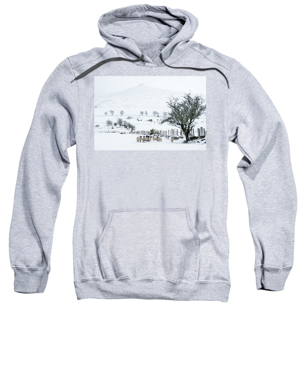 Sheep Sweatshirt featuring the photograph Sheep Shelter by Joe Ormonde