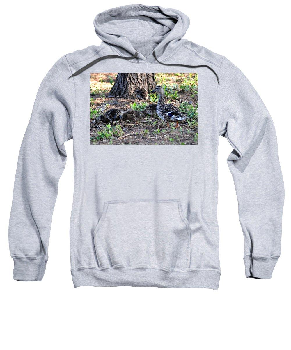Mallard Sweatshirt featuring the photograph Shore Duty by Belinda Stucki