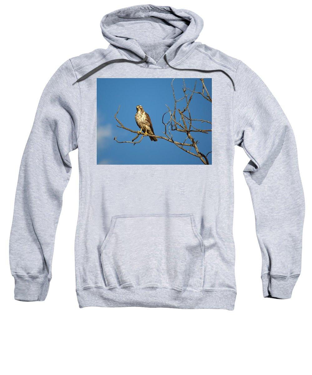 Nature Sweatshirt featuring the photograph Sideways Glance by Crystal Massop