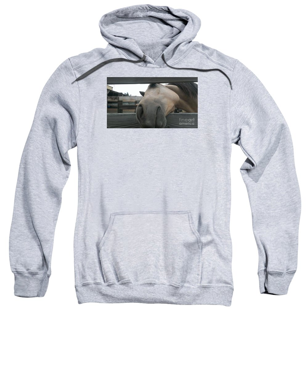 Horse Sweatshirt featuring the photograph Silly Horse by LKB Art and Photography
