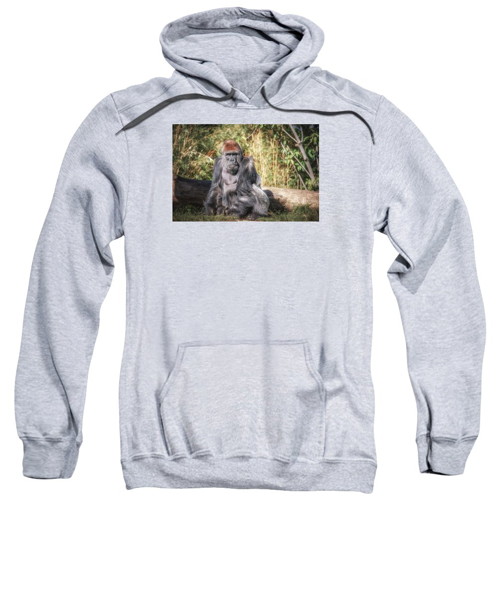 Wildlife Sweatshirt featuring the photograph Silverback by Artist Jacquemo