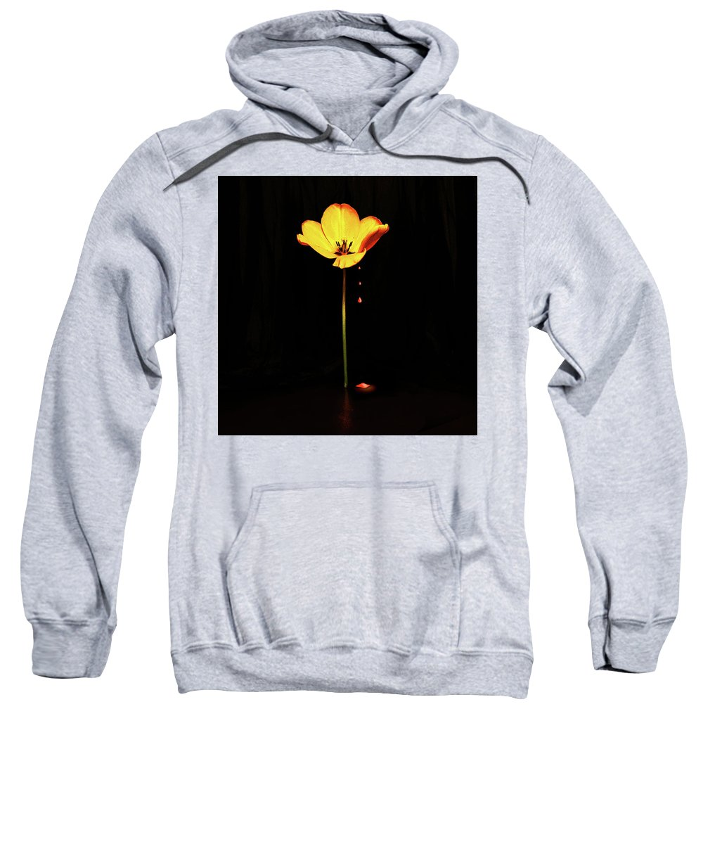 Single Flower Sweatshirt featuring the photograph Single Yellow Tulip On Black Background by Ludmila SHUMILOVA