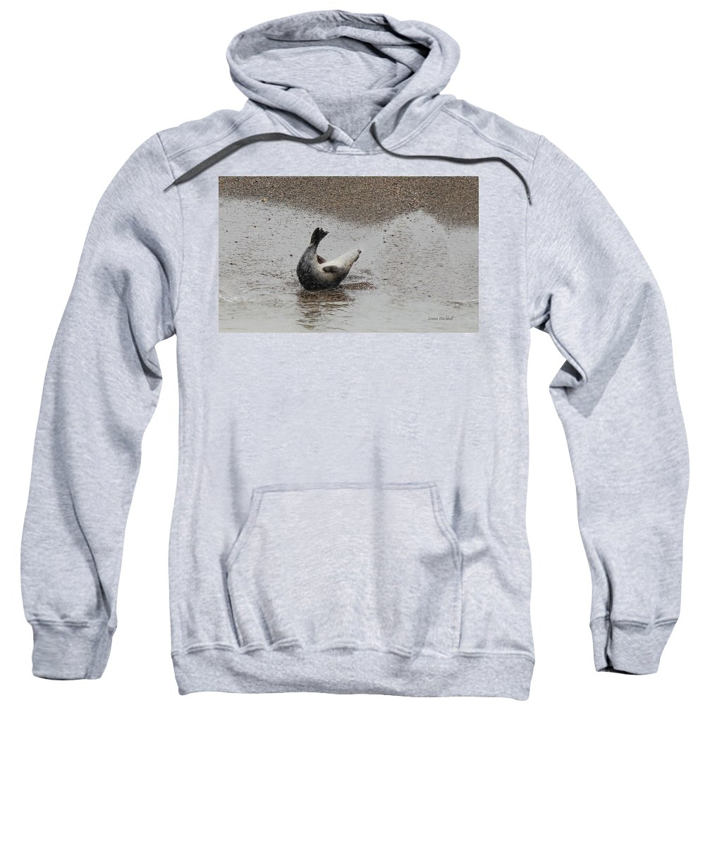 Seal Sweatshirt featuring the photograph Sit Ups by Donna Blackhall
