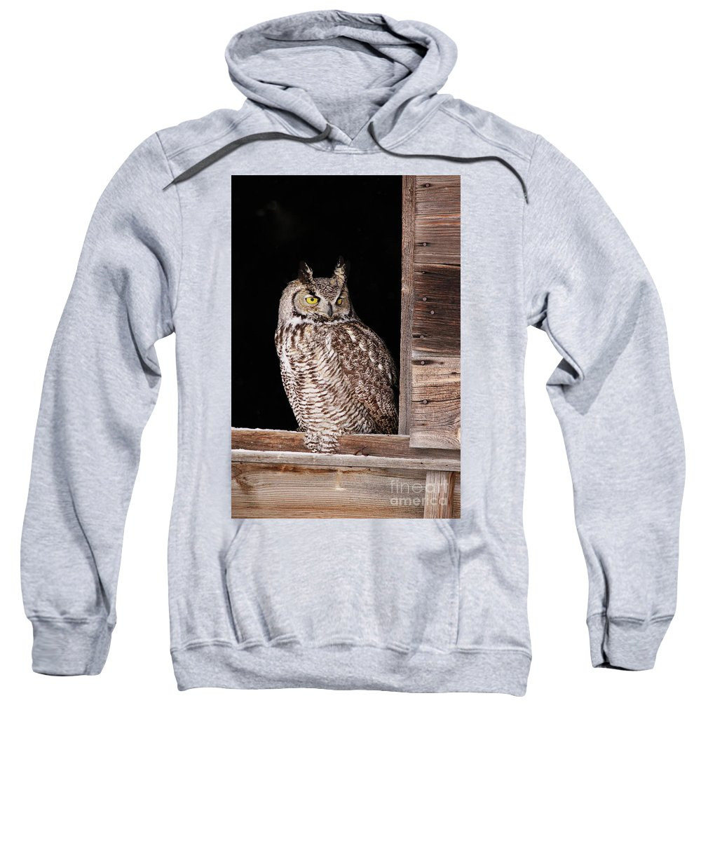 Owl Sweatshirt featuring the photograph Sitting In The Window by Alyce Taylor