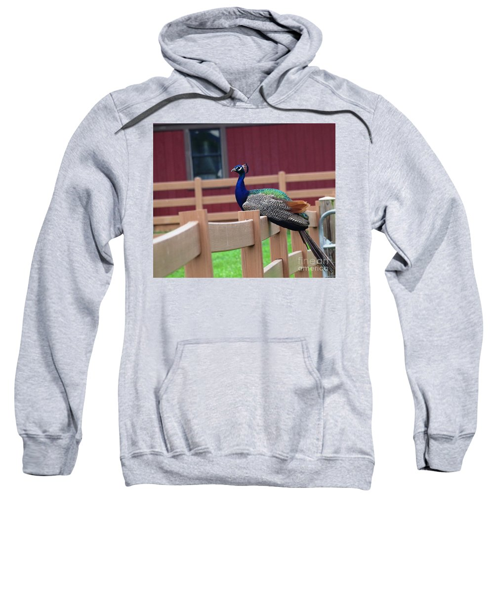 Peacock Sweatshirt featuring the photograph Sitting Peacock by Karen Quinker