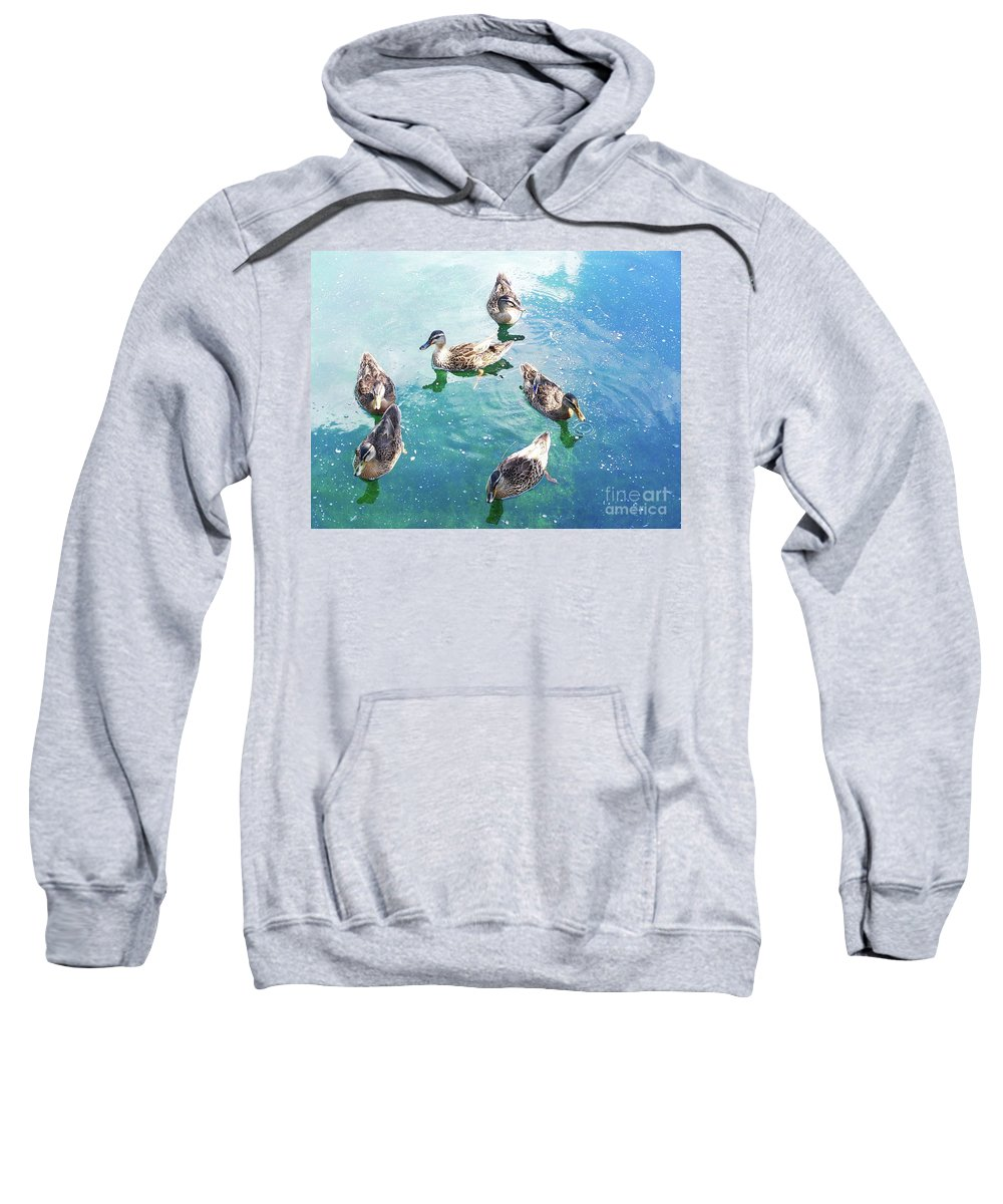 Happy Ducks Swimming On Beautiful Blue And Green Water Sweatshirt featuring the photograph Six Ducks Swim Together by Expressionistart studio Priscilla Batzell