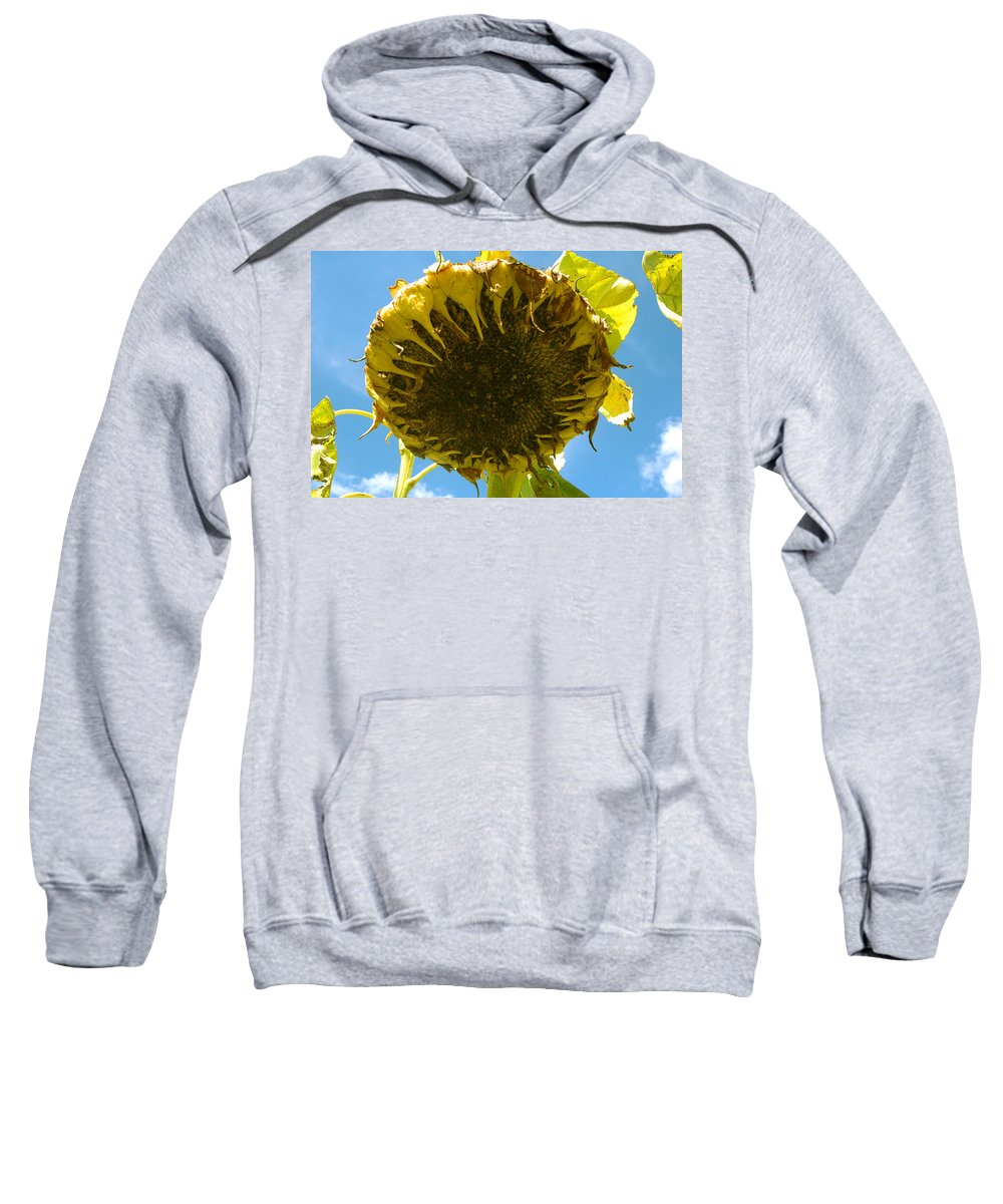 Sunflower Sweatshirt featuring the photograph Sleeping Sunflower by Trish Hale