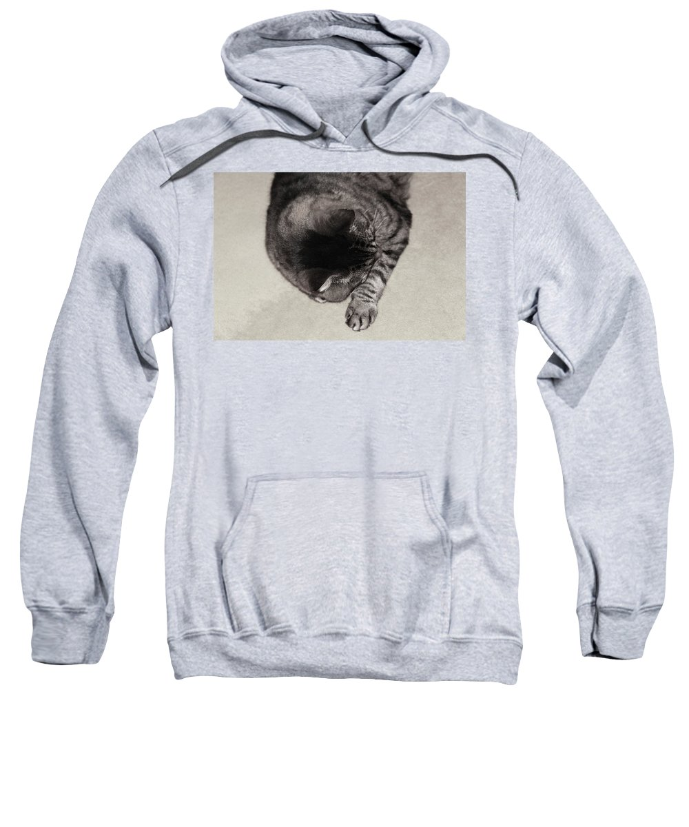 Sleepy Creature By Valeriatrot Sweatshirt featuring the photograph Sleepy Creature by Valeria New
