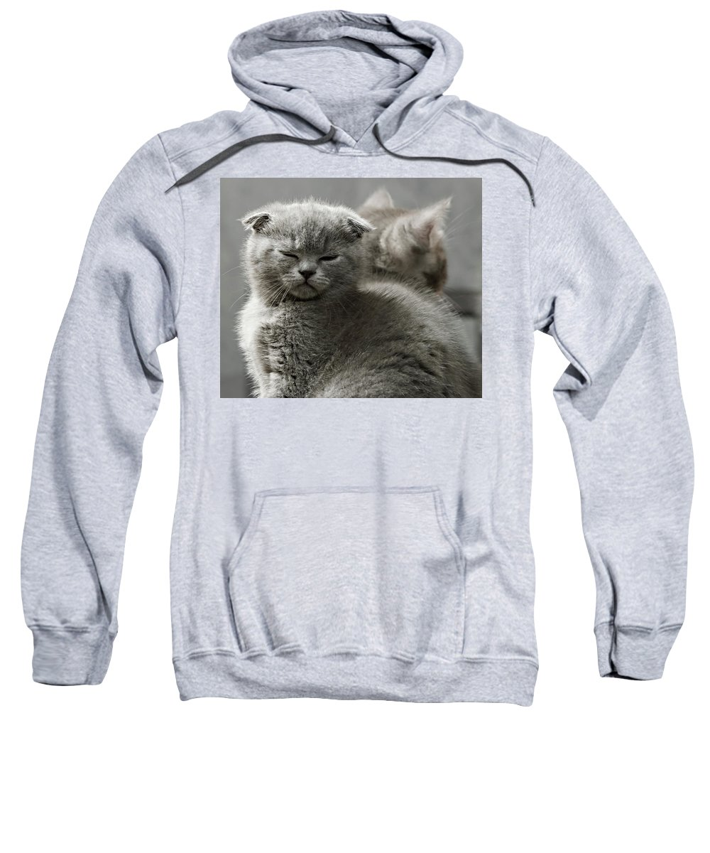 Scottish Fold Cats Sweatshirt featuring the photograph Slumbering Cat by Evgeniy Lankin