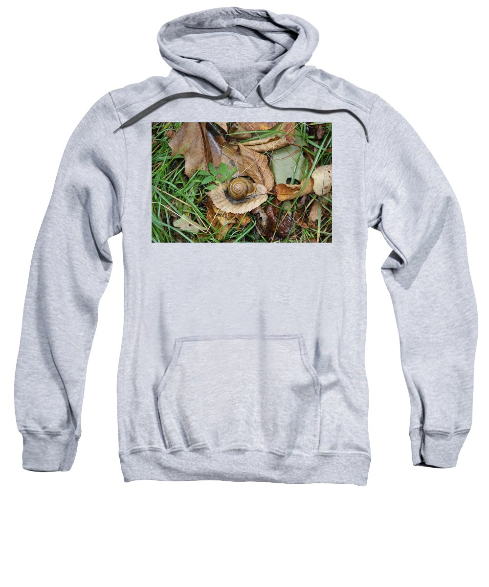 Snail Sweatshirt featuring the photograph Snail At Home by Allen Nice-Webb