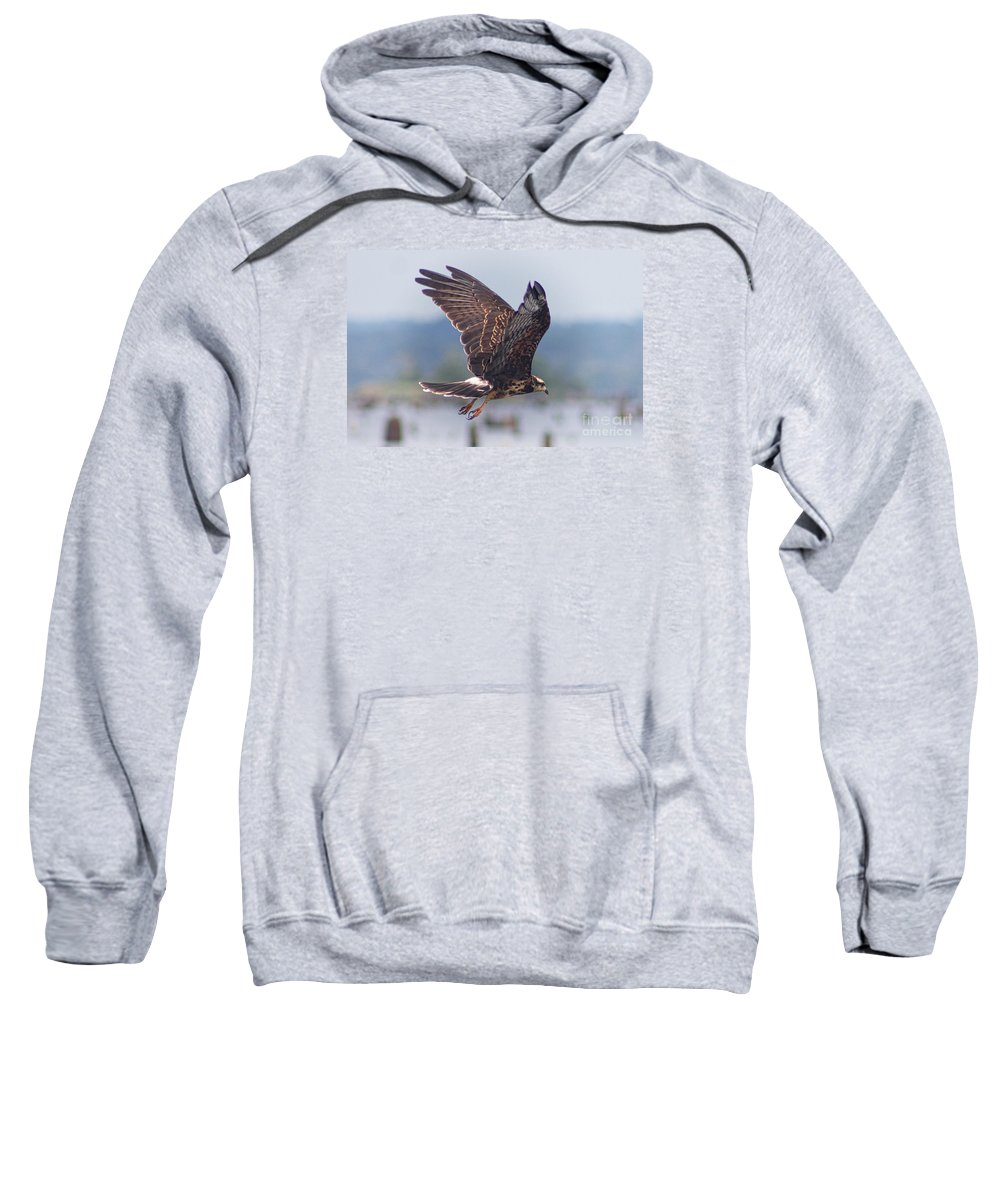 Birds Sweatshirt featuring the photograph Snail Kite by Bob Hislop