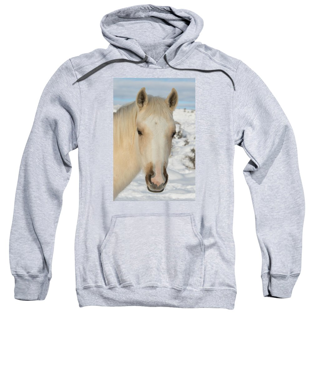 Wild Horse Sweatshirt featuring the photograph Snow Angel by Kent Keller