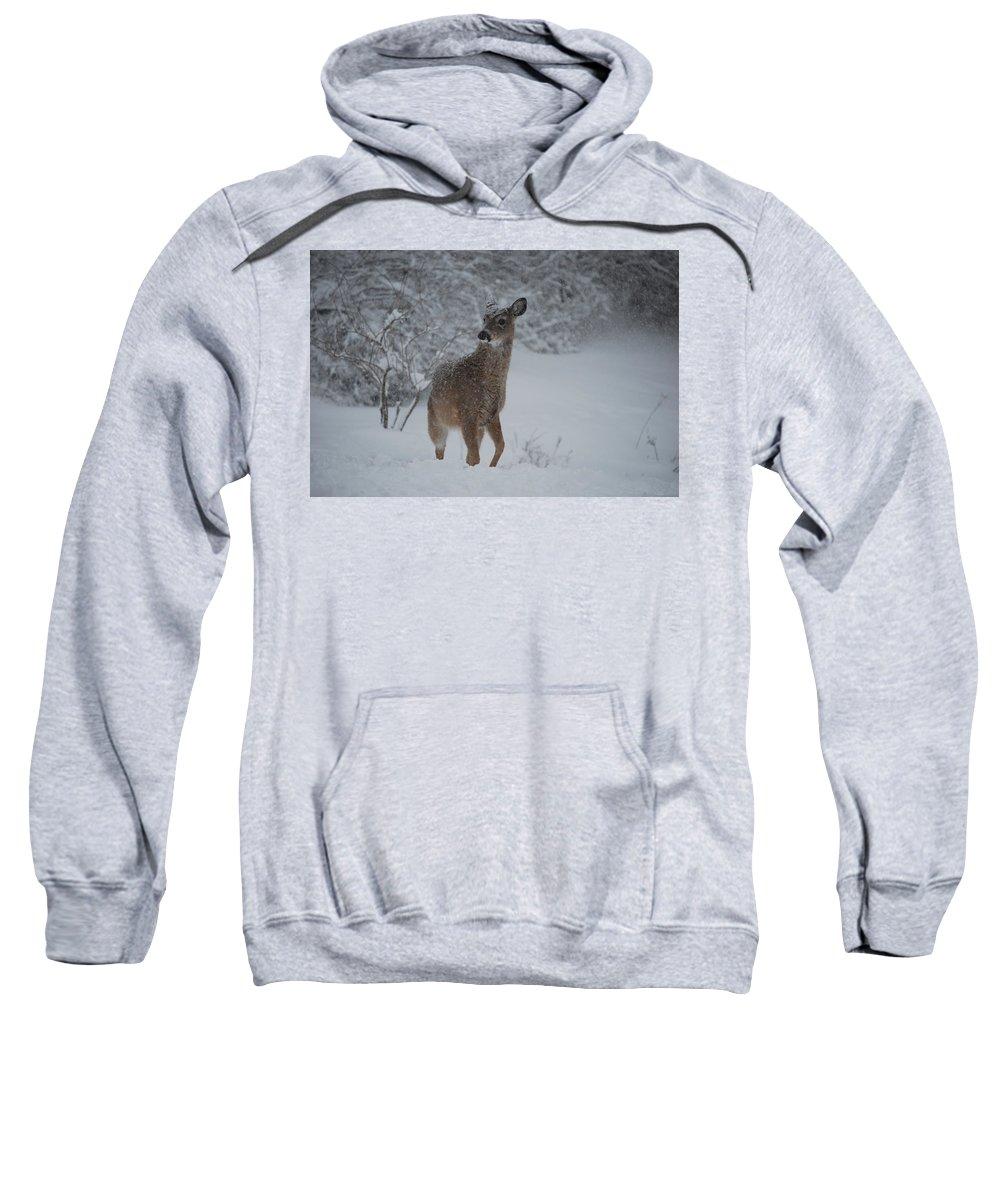 Deer Sweatshirt featuring the photograph Snowy Doe by Lori Tambakis