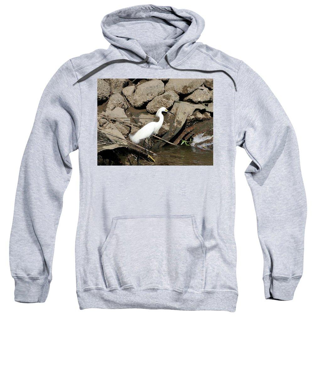 Snowy Egret Sweatshirt featuring the photograph Snowy Egret Fishing by Al Powell Photography USA
