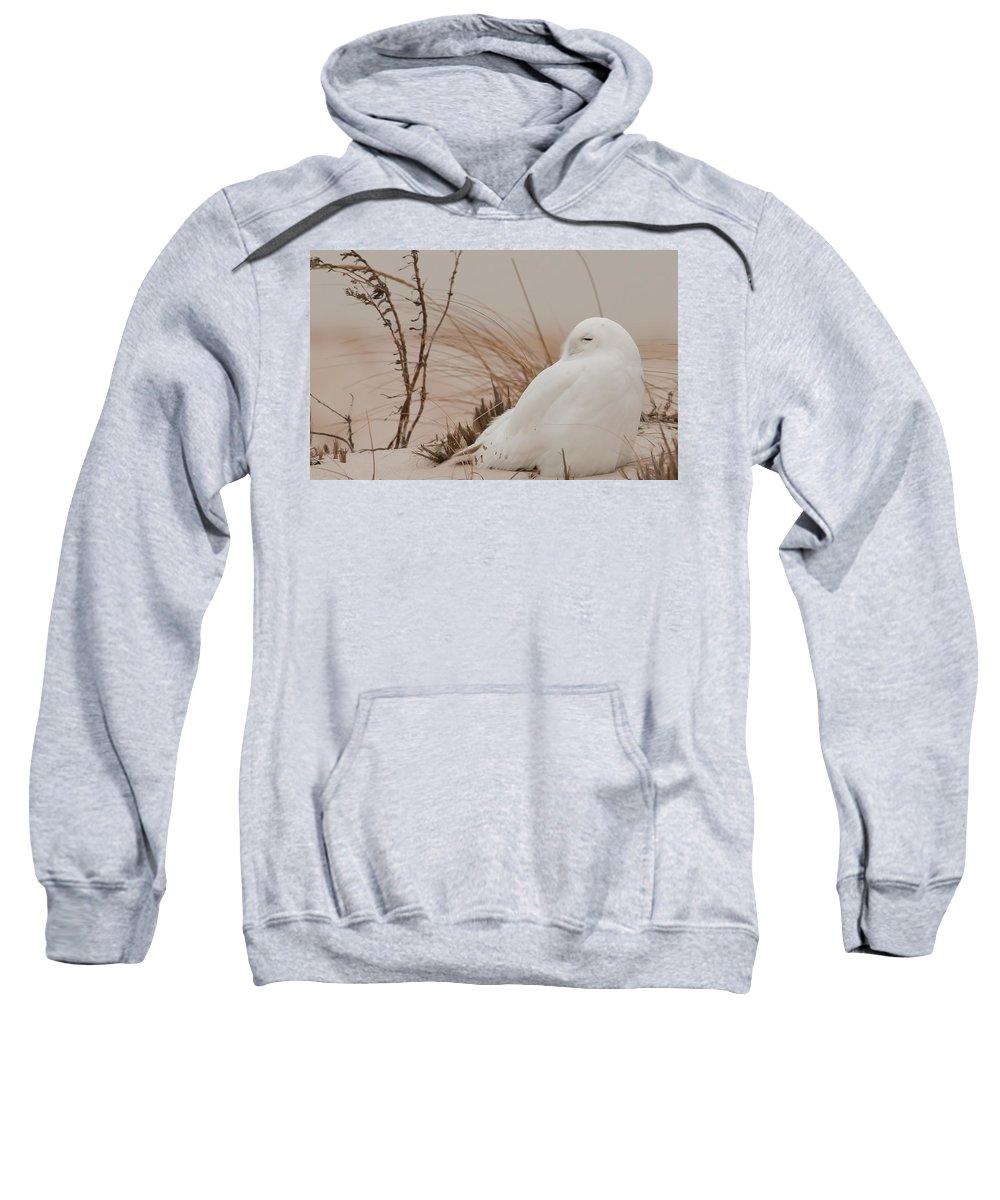 Snowy Owl Sweatshirt featuring the digital art Snowy Owl by Bert Mailer